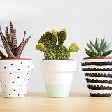 1-painted-pots.jpg