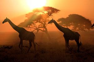 Reisedokumentation Afrika