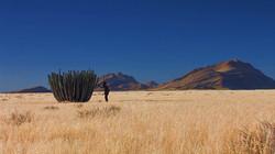 Namibia_Landschaft_Kaktus.jpg