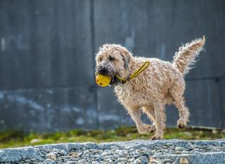 Hogyan legyen jó kutya gazdi? 4. rész: Gondoskodjon kedvence testmozgásáról!
