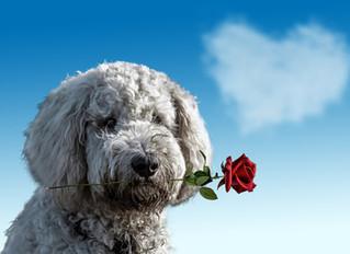 Hogyan legyen jó kutya gazdi? 6. rész: Szeresse kedvencét!
