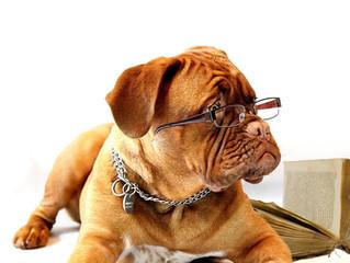 Hogyan legyen jó kutya gazdi? 5. rész: Nevelje kedvencét!