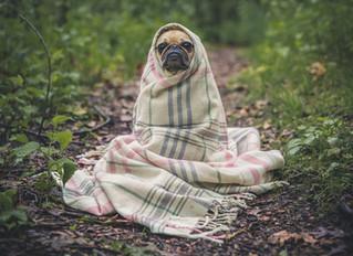 Hogyan legyen jó kutya gazdi? 1. rész: Óvja meg kedvence egészségét!