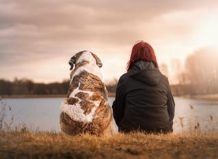 Melyek kutyánk legnagyobb egészségügyi kockázatai?
