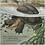 Thumbnail: A Blanding's Turtle Story