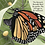 Thumbnail: A Monarch Butterfly Story