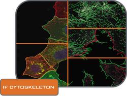 IF Cytoskeleton folder_CMYK.png