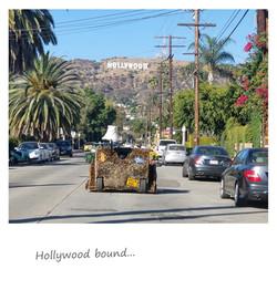 Hollywood Sofari