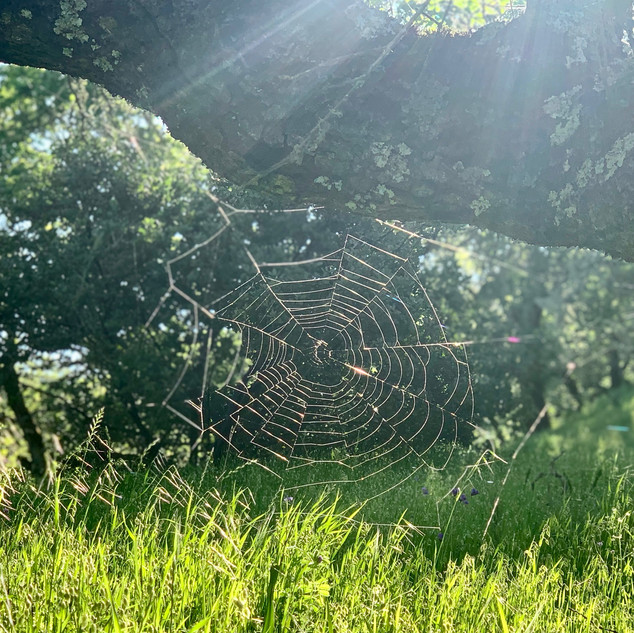 Spiderweb on a mornng hike
