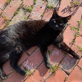 Pablo enjoying the sun
