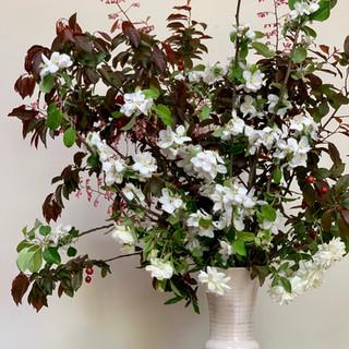 Wild Plum & Apple Blossoms