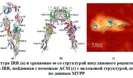 Сиротский белок обретает форму