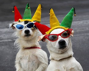 1bigstock-Dogs-Clowning-Around-3695519.j