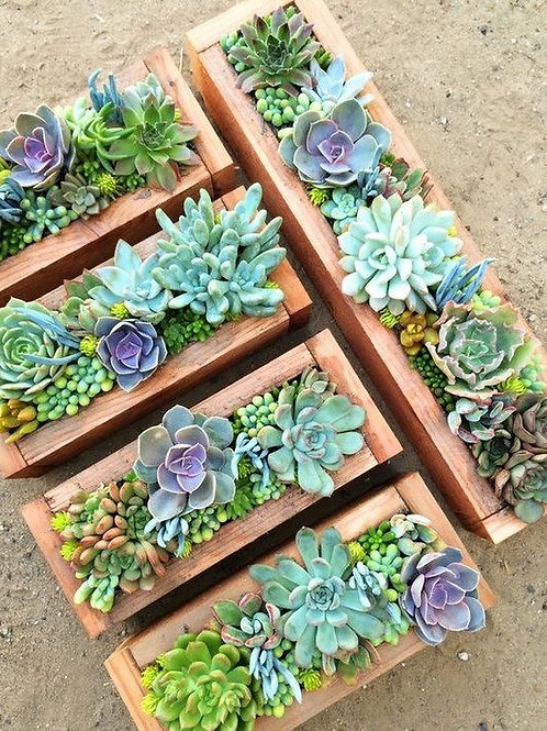 Succulent Plant-A-Long with Kelley! - Tuesday, March 16