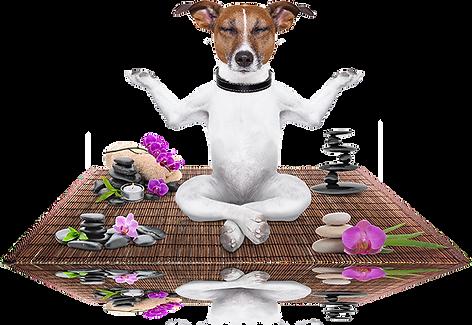 zen-dog.png