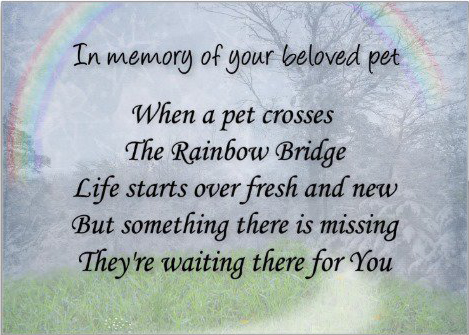 154697151-pet_loss_sympathy_card_pet_waits_for_you-r52ae3fbda5b44890b292b70e711f6d22_xvuak_8byvr_512