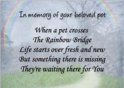 154697151-pet_loss_sympathy_card_pet_waits_for_you-r52ae3fbda5b44890b292b70e711f6d22_xvuak_8byvr_512