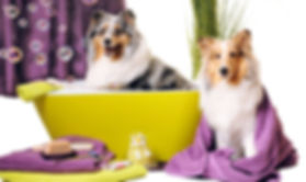 dog-spa-services-1510312942-3444484.jpeg