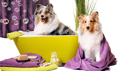 dog-spa-services-1510312942-3444484.jpeg