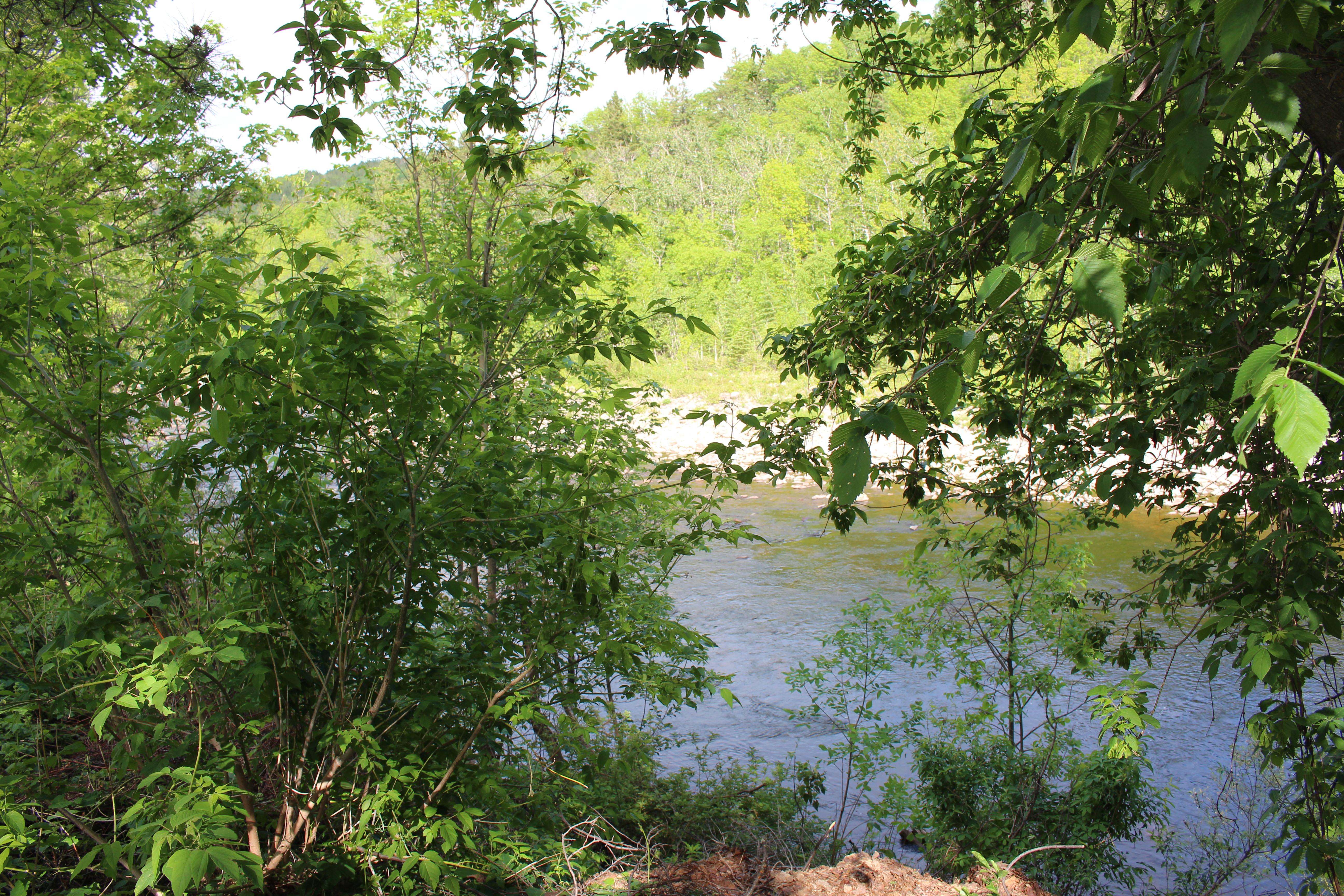 rivière derrière de la maison