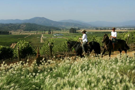 Wine route - Casablanca Valley.jpg