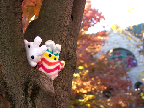 Bunnies in a Tree