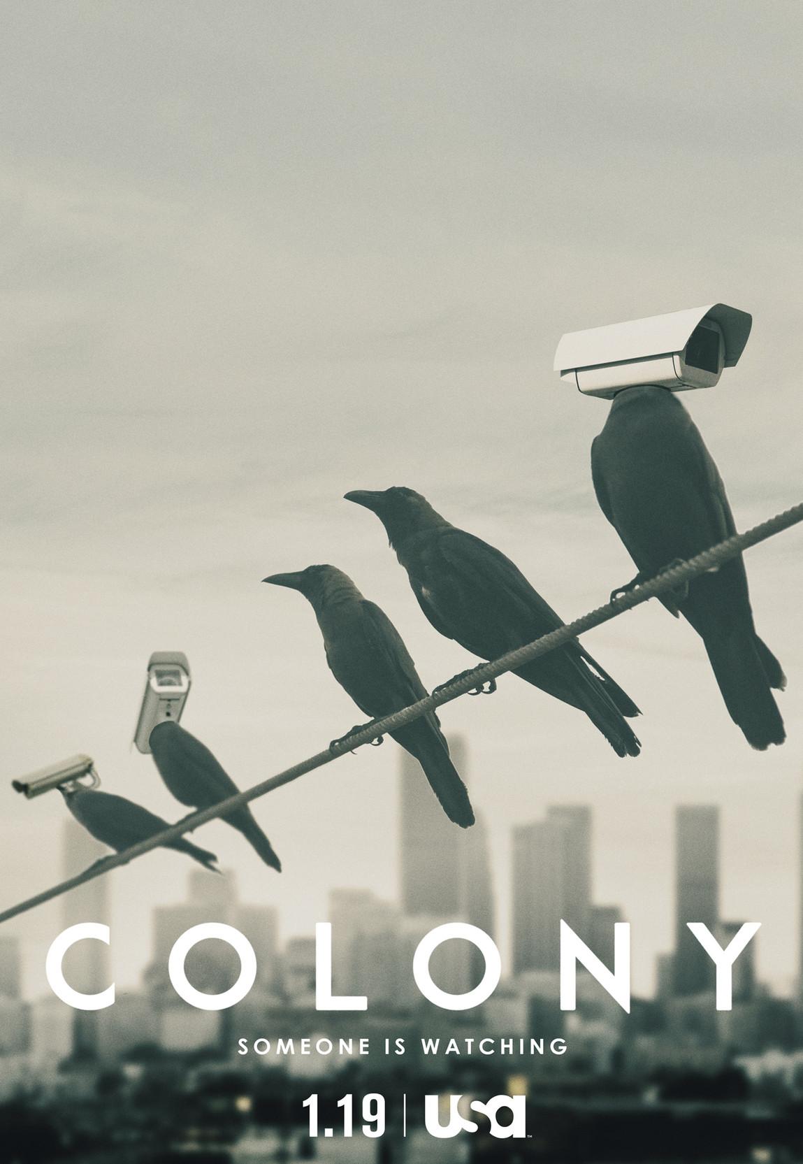 Colony2.jpg