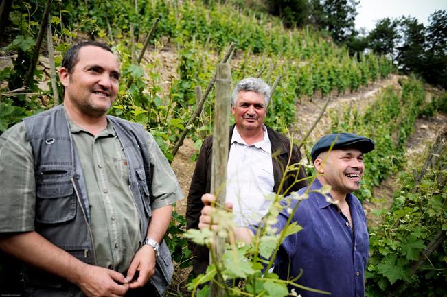 Vins de Vienne : de la viticulture haute couture