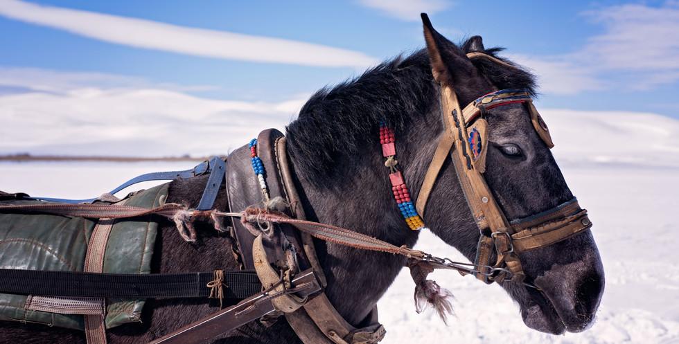 Turkish Horse | SilkRoad Moments
