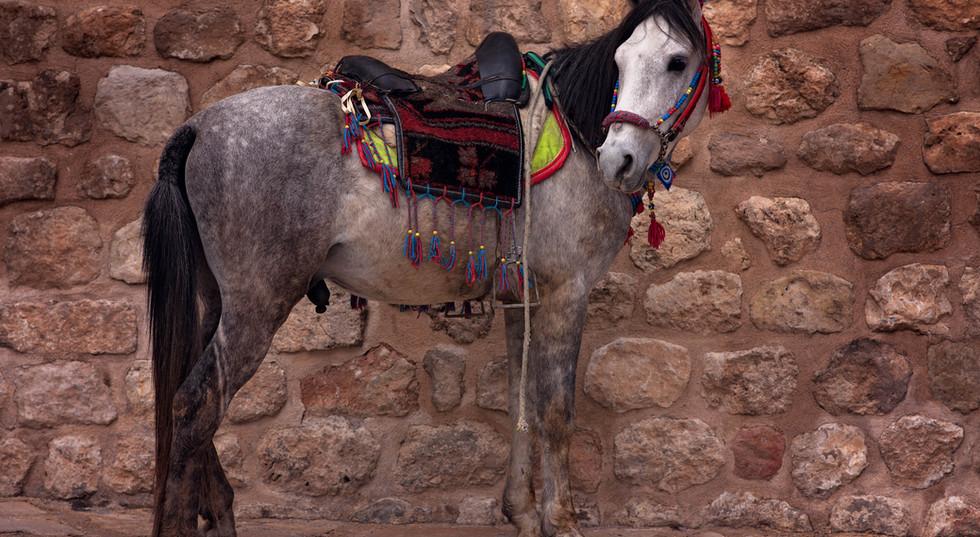 Horse In Mardin City | SilkRoad Moments