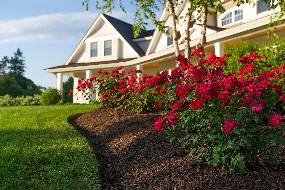 Indresano Corporation landscaping design, construction, maintenance – Manicured lawn