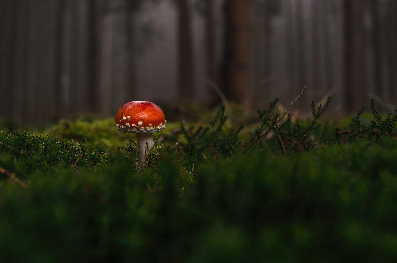 forest-1097403.jpg