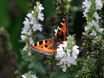 nature-flower-animal-insect-botany-butte