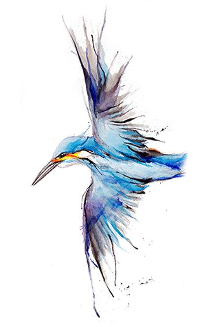 kingfisher8