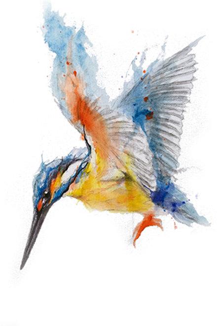 kingfisher11