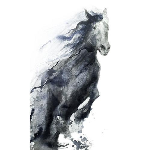 running black horse2