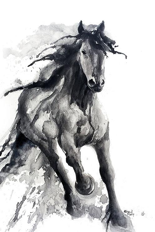 black horse 5