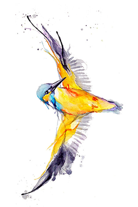 kingfisher9