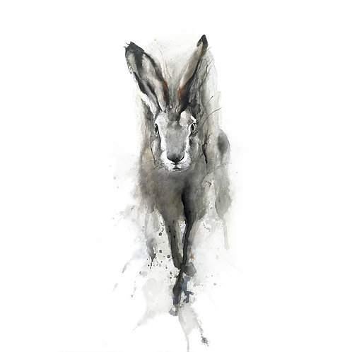 hare3