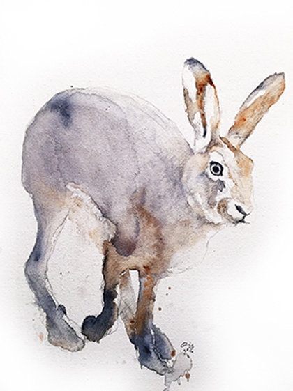 Hare4