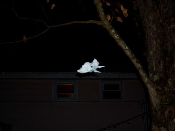untitled (deer skull).jpg