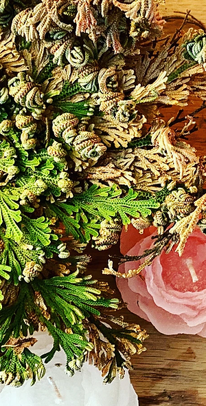 Resurrection Rose of Jericho
