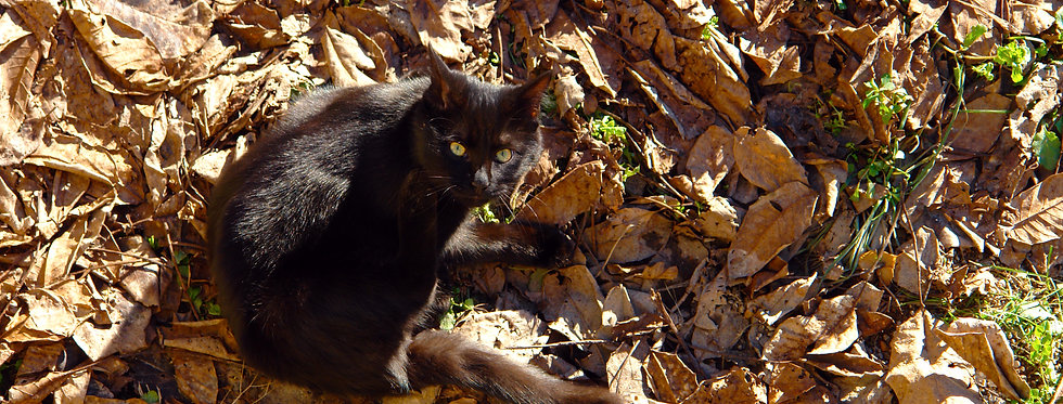 GATTO ORFEO D'AUTUNNO - File digitale