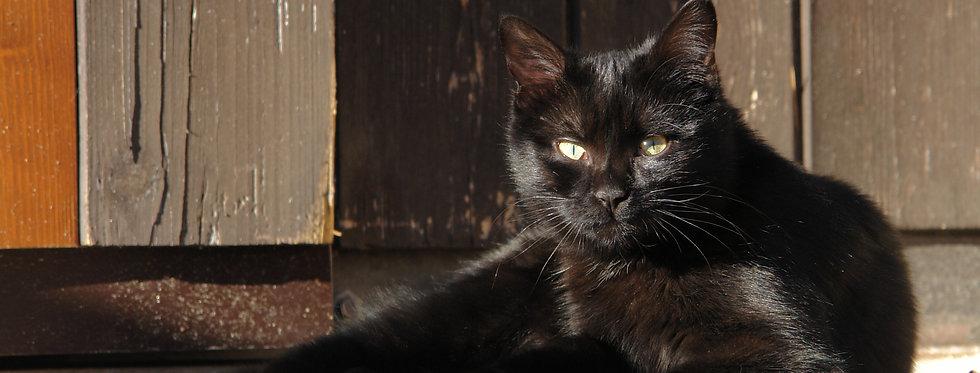 ORPHEUS CAT - Digital file