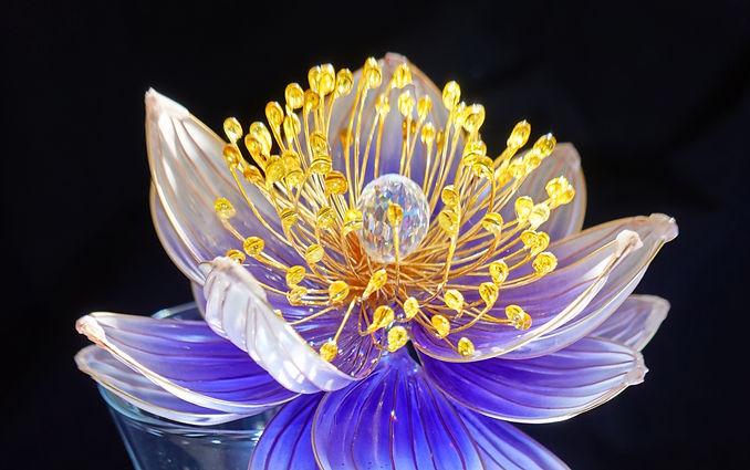 camellia cropped_edited_edited.jpg