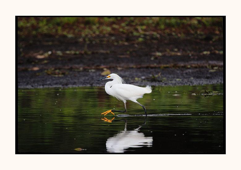 White reflection