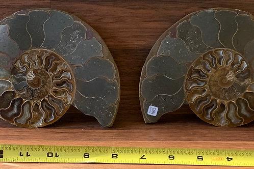 Large Pair of Ammonite