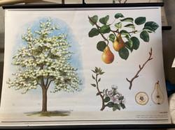 Czech Botanical School Guide