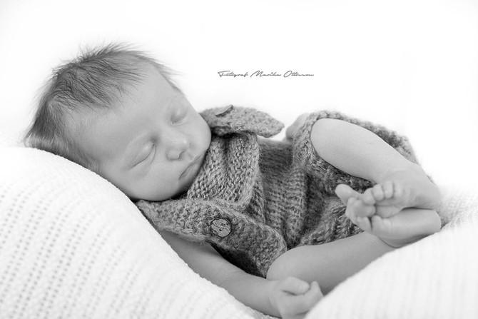 Nyföddsfotografering i studion