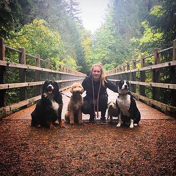 Walking dogs in Duncan, British Columbia.